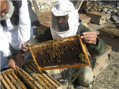 Beekeeping in Afghanistan